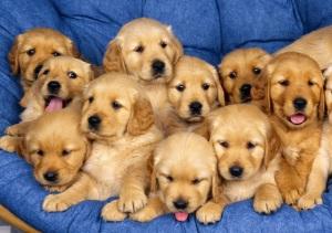 Aaaaaawwwwwwwwww-Sweet-puppies-9415255-1600-1200